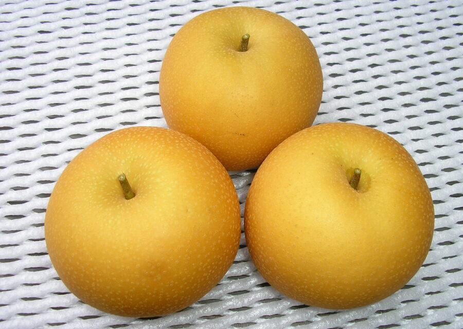 梨(新品種) 8月中旬~12月上旬イメージ01