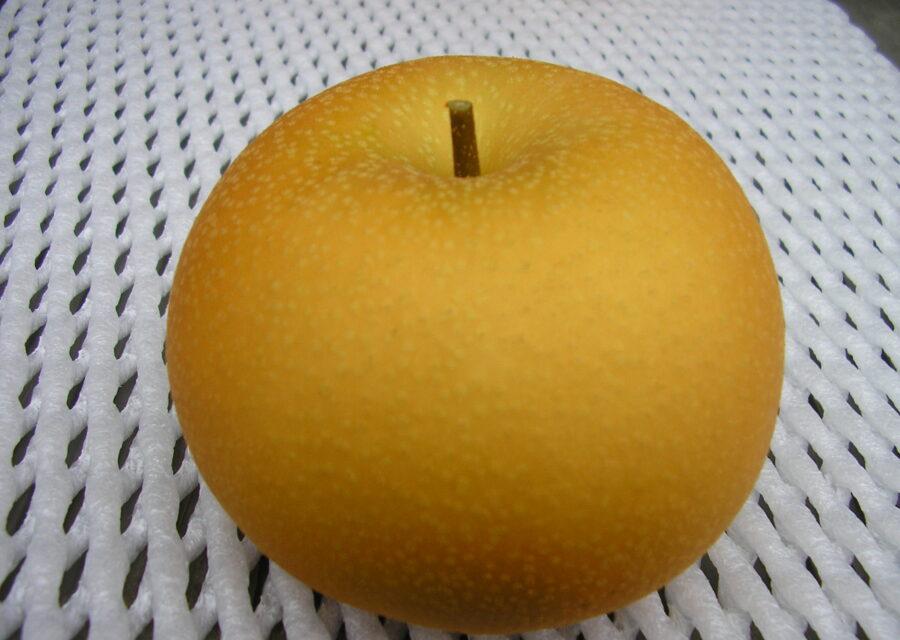 梨(新品種) 8月中旬~12月上旬イメージ02